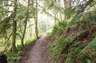 I love to hike. This is from the Tiger Mountain Trail near Issaquah.