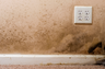 Mold / fungal growth resulting from water intrusion.   Call (888) 350-9080 for a free consultation / inspection.