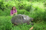 A close encounter with the giant Galapagos land tortoise in February, 2008. This specimen is probably over 100 years in age and about 600 pounds.